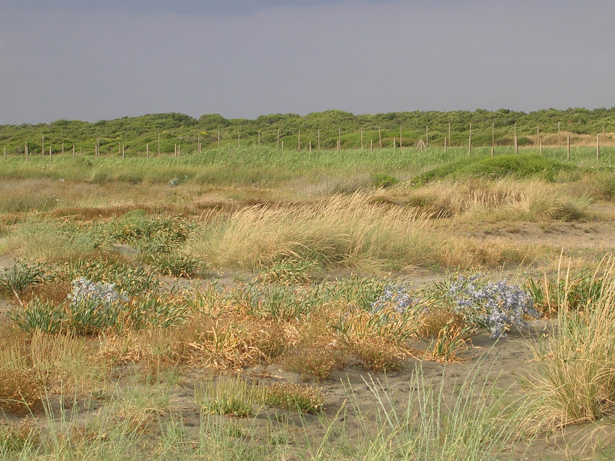 Dune costiere antistanti l'Oasi di Macchiagrande