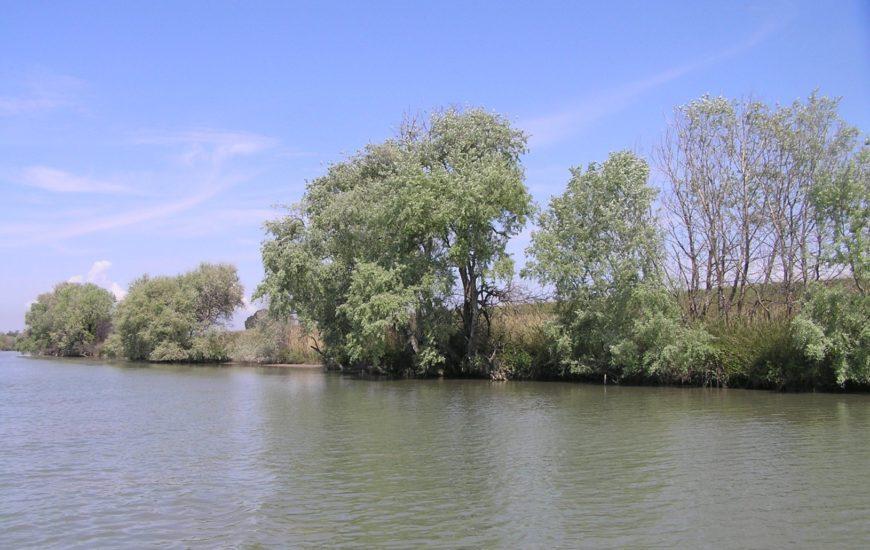 Argine del Tevere